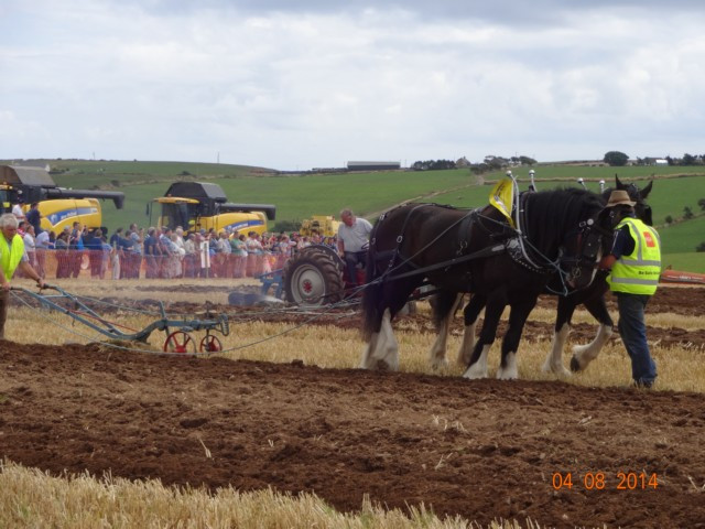 Horse-ploughing